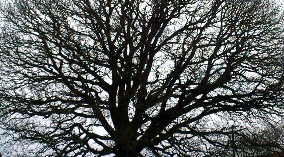 Tree time: February…