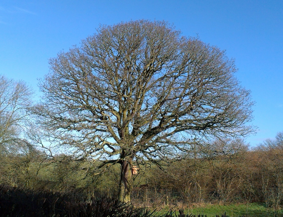 Tree time: March…