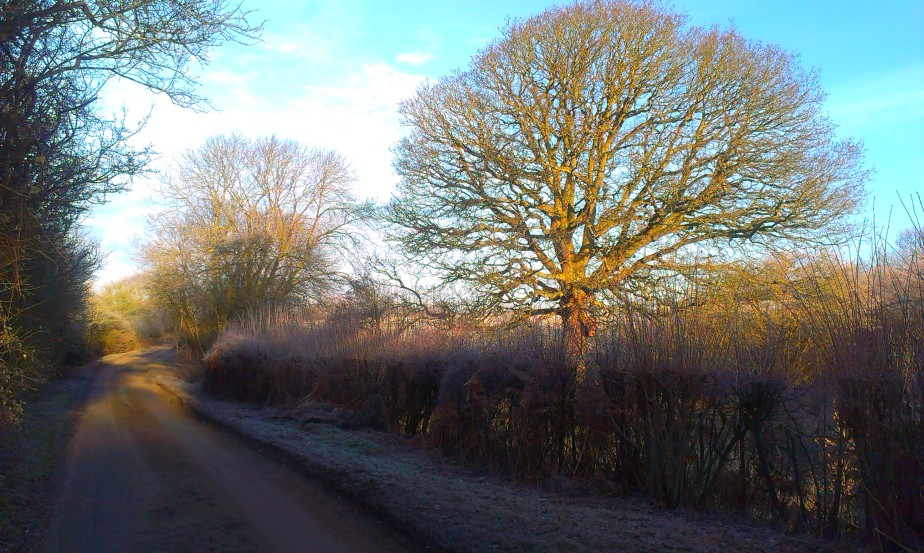 Tree time: An oak through ayear…