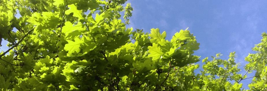 Green – everywhere Ilook…